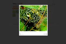 Portfolio Website | Schreiner | Diashow